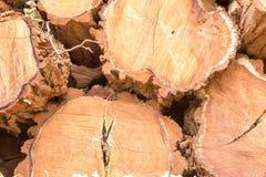 Предпосылка штабелированных журналов отрезка древесины Стоковые Изображения