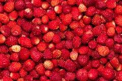 Предпосылка ягод одичалой клубники с концом-вверх лист стоковые фото