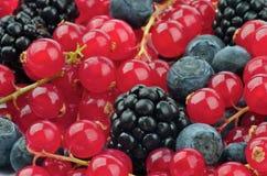 Предпосылка ягод Стоковое Фото