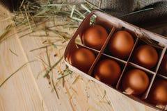 Предпосылка яичек Стоковые Изображения