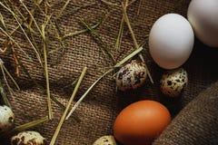 Предпосылка яичек Стоковое Изображение