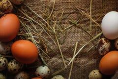 Предпосылка яичек Стоковая Фотография RF