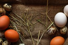 Предпосылка яичек Стоковые Фотографии RF