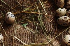 Предпосылка яичек Стоковое Изображение RF