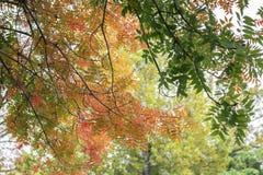 Предпосылка Autum сочной красочной листвы в пастелях в переднем плане с деревьями и листьями bokeh позади стоковые изображения rf
