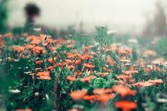 предпосылка birdies вал весны пар bloosom сказовый флористический Стоковое Фото