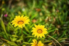 Предпосылка Defocus красивая флористическая Стоковое Изображение