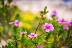 Предпосылка Defocus красивая флористическая Стоковые Изображения