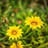 Предпосылка Defocus красивая флористическая Стоковое фото RF