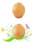 предпосылка eggs белизна курицы s Бесплатная Иллюстрация