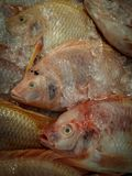 Предпосылка Fishs Стоковое фото RF