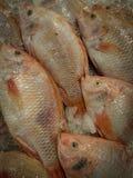 Предпосылка Fishs Стоковое Изображение