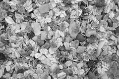 Предпосылка muesli - хлопьев с семенами, плодоовощ и гайками Стоковая Фотография