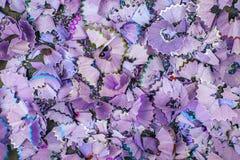 Предпосылка multicolor shavings карандаша Стоковое Фото