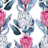 Предпосылка protea цветков картина безшовная Стоковые Фотографии RF