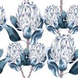 Предпосылка protea цветков картина безшовная Стоковые Изображения RF
