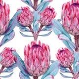 Предпосылка protea цветков картина безшовная Стоковое Изображение RF