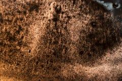 Предпосылка sepia акварели абстрактная Стоковая Фотография