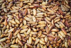 Предпосылка Silk червя Стоковые Фото