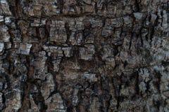 Предпосылка/textur коры дерева стоковые изображения rf