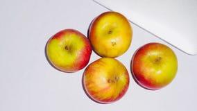 Предпосылка wiith Индии Яблока белая стоковое изображение