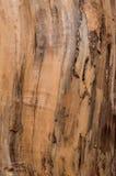 предпосылки деревянные Стоковое Изображение RF