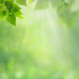 Предпосылки лета естественные Стоковое Изображение RF