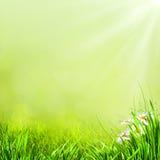 Предпосылки лета естественные Стоковое Фото