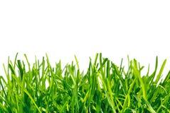 предпосылки травы белизна толщиной Стоковые Фотографии RF