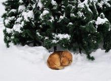 Предприниматель желтой бездомной собаки ждать Стоковое Изображение RF