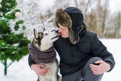 Предприниматель и лайка Сибирская лайка целуя человека в стороне в Рождестве зимы стоковое изображение