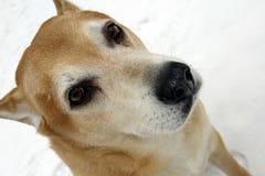 Предприниматель меньше собака стоковая фотография