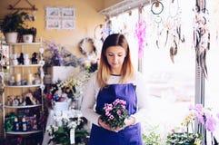 Предприниматель молодой женщины магазина флориста держа состав на цветке красоты стоковые фото