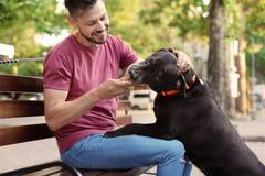Предприниматель обрабатывая его коричневый retriever labrador стоковая фотография rf