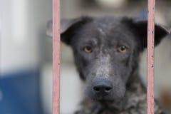 Предприниматель пакостной собаки ждать с унылой стороной, селективным фокусом стоковая фотография