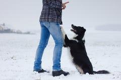 Предприниматель тренирует ее собаку, Коллиу границы стоковая фотография rf