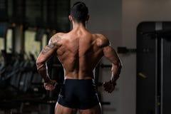 Представление задних мышц мышечного человека изгибая Стоковые Фотографии RF