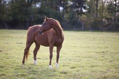 представление лошади стоковая фотография rf