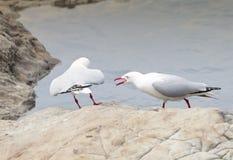 представленные счет чайки красные Стоковое Изображение