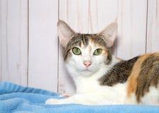 представлять изображения кота милый маленький стоковое фото rf