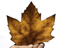 представлять листьев падения Стоковые Изображения RF