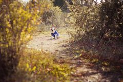 Представлять меха английско-французского бульдога щенка красный белый сидит для камеры в одичалом лесе нося вскользь одежды Милая Стоковые Изображения RF