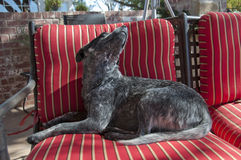 представлять собаки Стоковая Фотография RF