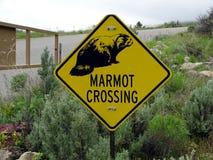 Предупредительный знак что сурки могут пересекать стоковое изображение rf