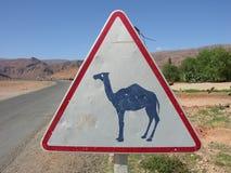 предупреждение знака верблюда Стоковое фото RF