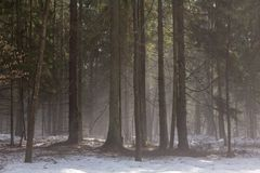 Предыдущая весна в лесе стоковая фотография rf