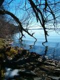 предыдущая весна отражений Стоковые Фотографии RF