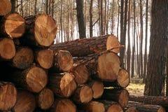 предыдущая весна Расчистка леса, хоботы сложила вверх стоковое фото