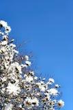 предыдущая весна Стоковое Изображение
