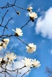 предыдущая весна Стоковое фото RF